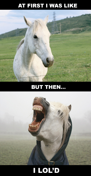 horse-lold