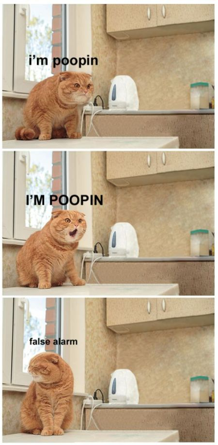 comixed - Poopin' Cat is Poopin? Maybe Not.
